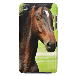 Beautiful Brown Horse Green Grass iPod Touch Case