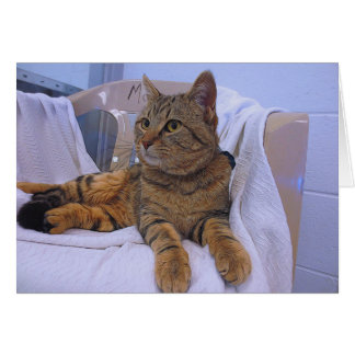 Beautiful Brown Tabby Card