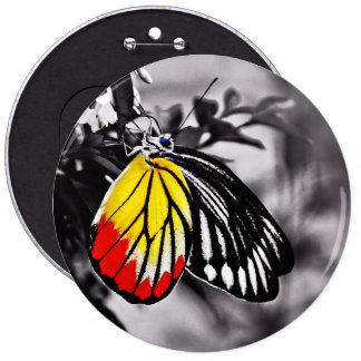 Beautiful Butterfly 6 Inch Round Button