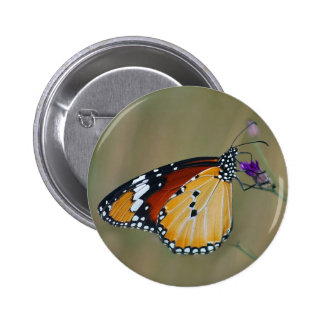 Beautiful butterfly and lifes nectar pins