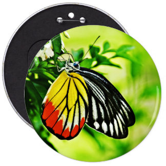 Beautiful Butterfly on Flowers 6 Inch Round Button