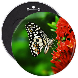 Beautiful Butterfly on Red Flowers 6 Inch Round Button