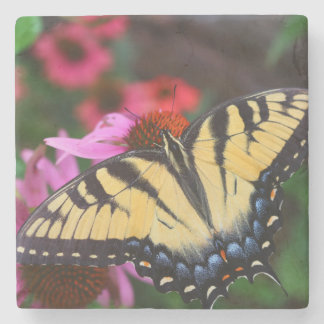 Beautiful Butterfly Stone Beverage Coaster