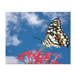 Beautiful Butterfly Stretched Canvas Prints