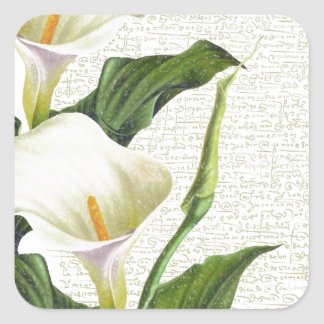 Beautiful Calla Lilies Square Sticker