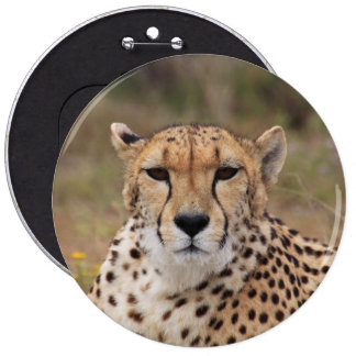 Beautiful cheetah portrait 6 inch round button