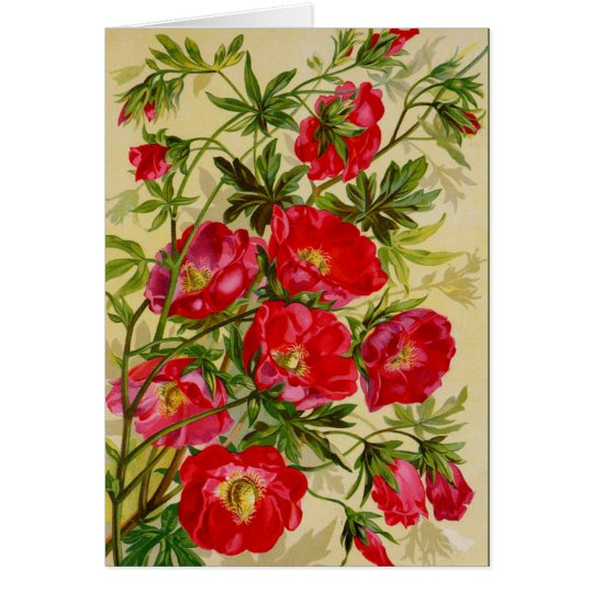 Beautiful Cherry Red Wild Roses Notecards Card