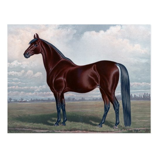 Beautiful Chestnut Horse Fine Art Postcard