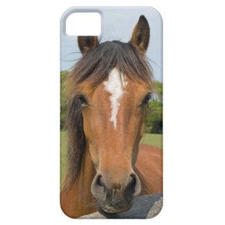 Beautiful chestnut horse photo iphone 5 case