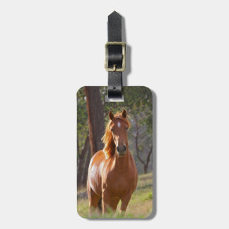 Beautiful chestnut horse photo portrait, gift luggage tag