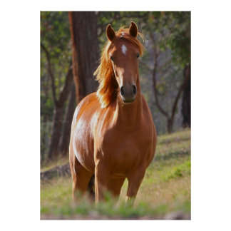 Beautiful chestnut horse photo portrait poster