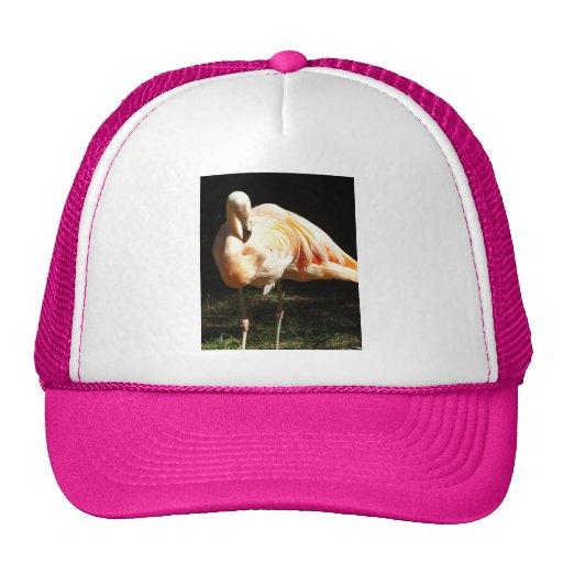 Beautiful Chilean Flamingos on One Leg in Shadow Hats