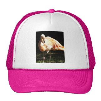 Beautiful Chilean Flamingos on One Leg in Shadow Trucker Hat