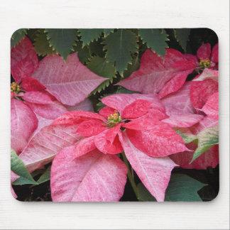 Beautiful Christmas Poinsettia Photo Mouse Pad