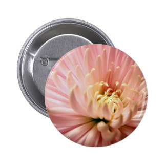 beautiful chrysanthemum 2 inch round button