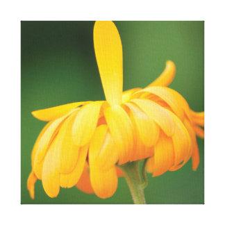 Beautiful close-up photo orange flower on green canvas print