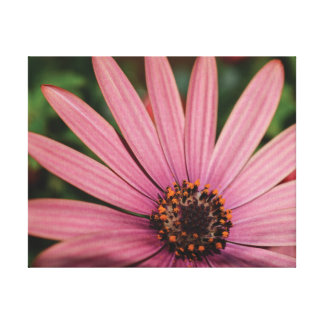 Beautiful close-up photo orange & purple flowers canvas print