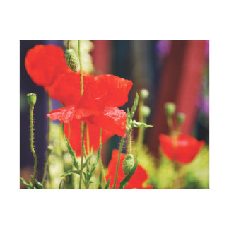 Beautiful close-up photo red poppies canvas print