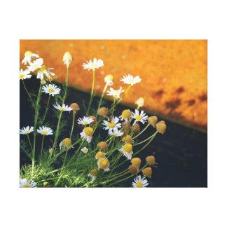 Beautiful close-up photo white daisies canvas print