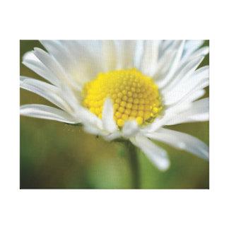 Beautiful close-up photo white daisy canvas print