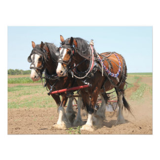 Beautiful clydesdale horses ploughing art photo