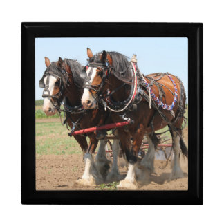 Beautiful clydesdale horses ploughing gift box