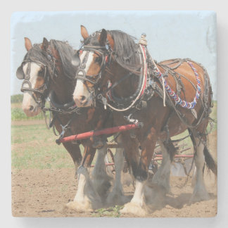 Beautiful clydesdale horses ploughing stone coaster