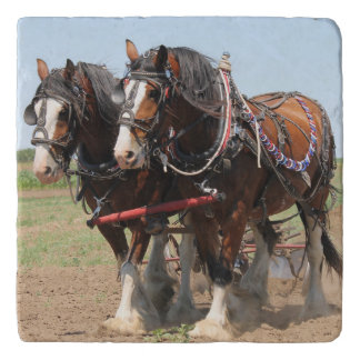 Beautiful clydesdale horses ploughing trivet