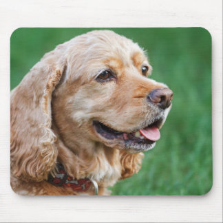 Beautiful Cocker Spaniel with Green Background Mouse Pad