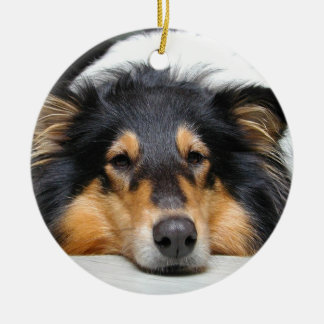 Beautiful Collie dog nose tri color  ornament