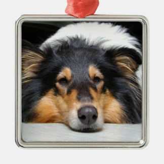 Beautiful Collie dog nose tri color ornament, gift Metal Ornament