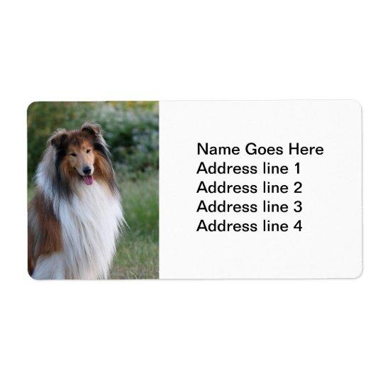 Beautiful Collie dog portrait address labels