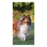 Beautiful Collie dog portrait photo card gift idea