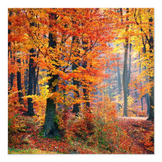 Beautiful colorful autumn fall forest sunbeams card