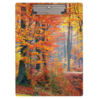 Beautiful colorful autumn fall forest sunbeams clipboard