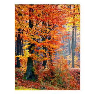 Beautiful colorful autumn fall forest sunbeams postcard