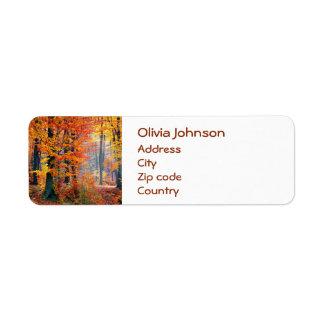 Beautiful colorful autumn fall forest sunbeams return address label