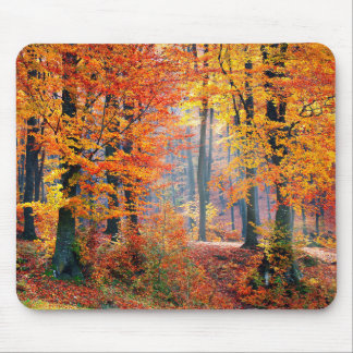 Beautiful colorful autumn forest sunbeams mouse pad