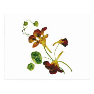 Beautiful Colorful Embroidered Nasturtiums Postcard
