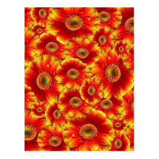 Beautiful colorful gerberas postcard