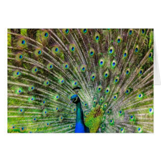 Beautiful, colorful peacock card