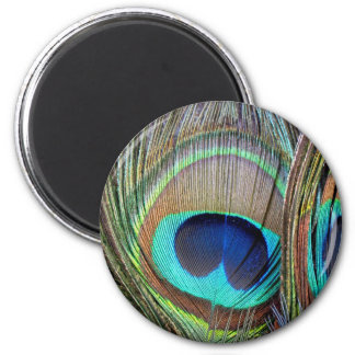 Beautiful colorful peacock feathers 2 inch round magnet
