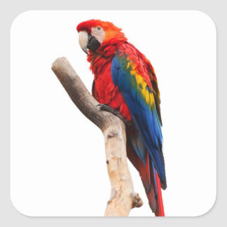Beautiful Colorful Scarlet Macaw Parrot Bird Square Sticker