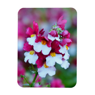 Beautiful colors flower blossom rectangle magnet