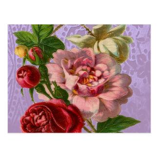 Beautiful Colourful Roses Postcard