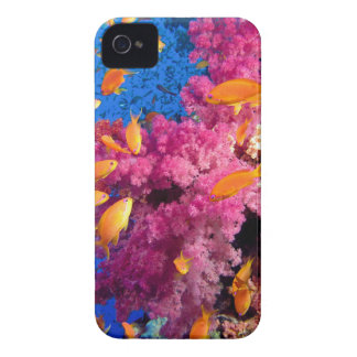 Beautiful Coral Reef Naturescape iPhone 4 Case-Mate Cases