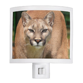 Beautiful cougar close-up night lights