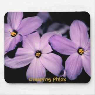 Beautiful Creeping Phlox Flowers Mousepad