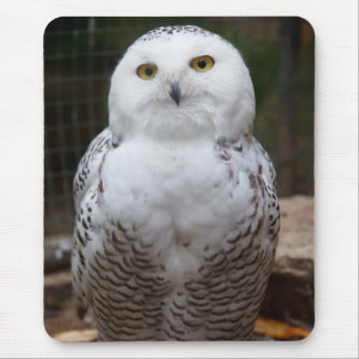Beautiful cute  White snow owl bright eyes image Mouse Pad