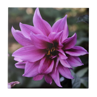 Beautiful Dahlia Flower Tiles